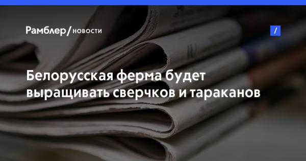 Белорусская ферма будет выращивать сверчков и тараканов для еды