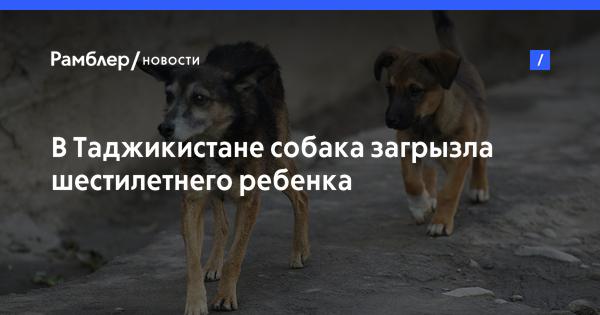 В Таджикистане собака загрызла шестилетнего ребенка