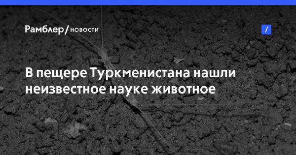 В Туркмении нашли необычного членистоногого «троглодита»