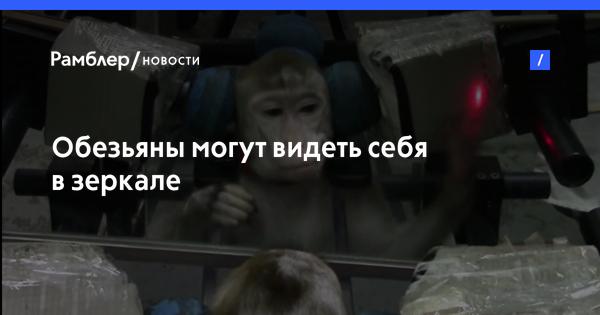 Видео новости россии и мира сегодня на ютубе нтв онлайн