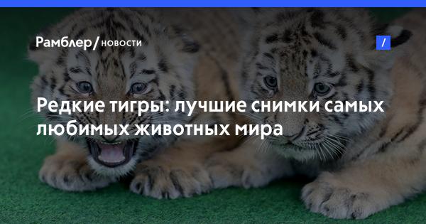 Жара, запах и старые клетки: во что превратился известный зоопарк Душанбе