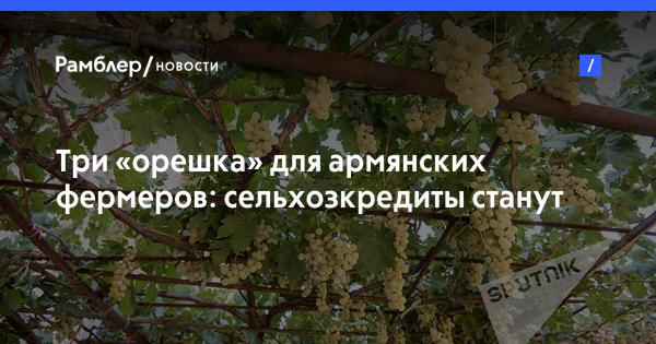Три «орешка» для армянских фермеров: сельхозкредиты станут доступнее