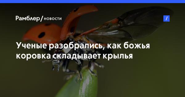 Новости красного кута саратовской области прокуратура